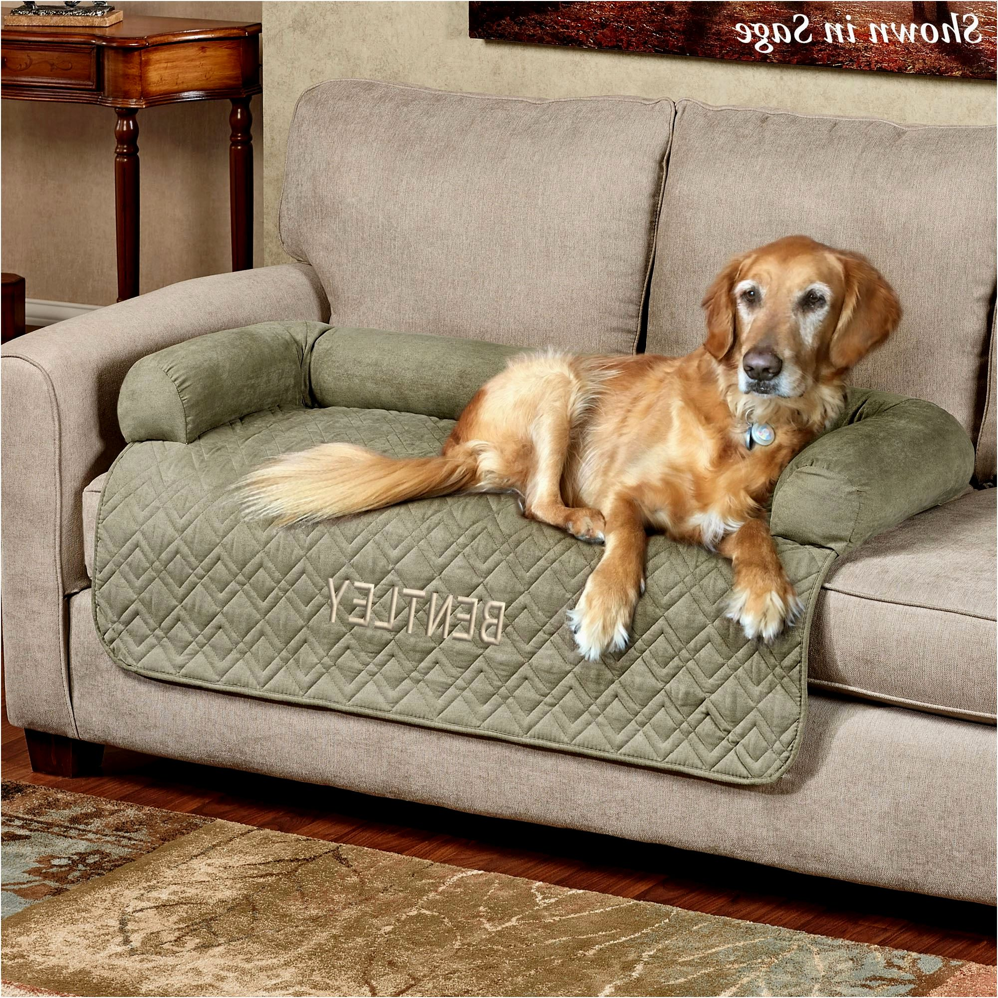 beautiful sofa covers for dogs inspiration-Beautiful sofa Covers for Dogs Ideas
