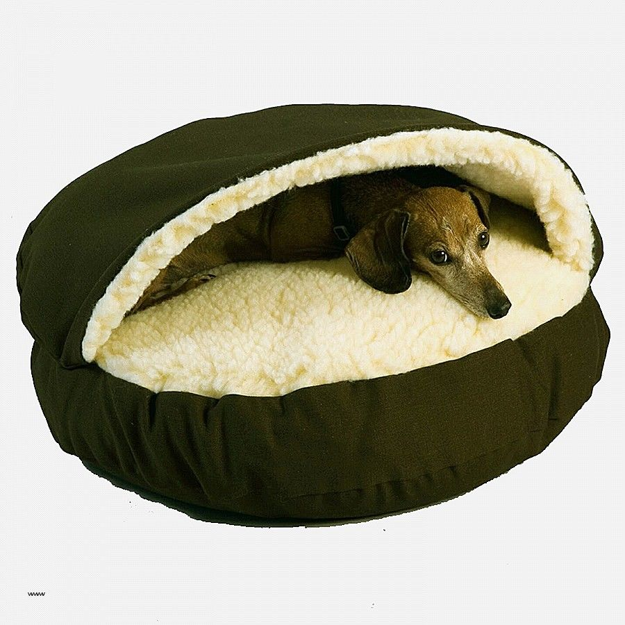 awesome snoozer overstuffed sofa pet bed collection-Lovely Snoozer Overstuffed sofa Pet Bed Ideas