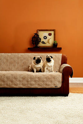 excellent cat friendly sofa model-Latest Cat Friendly sofa Inspiration