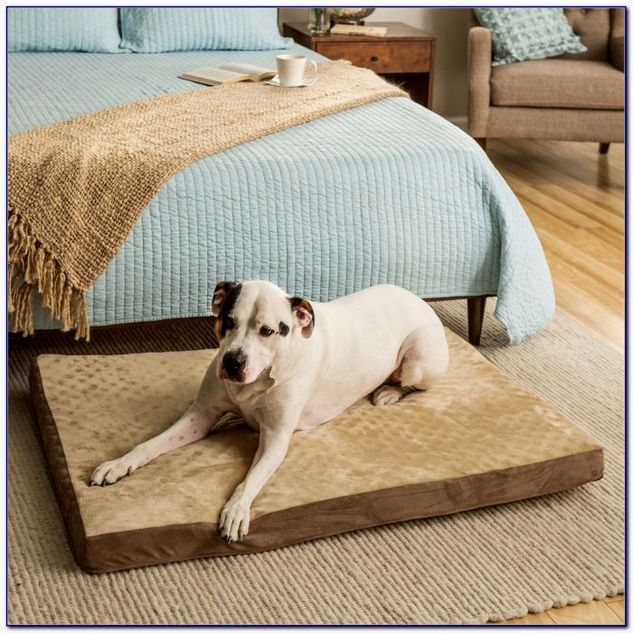 excellent dog bed sofa gallery-Luxury Dog Bed sofa Collection