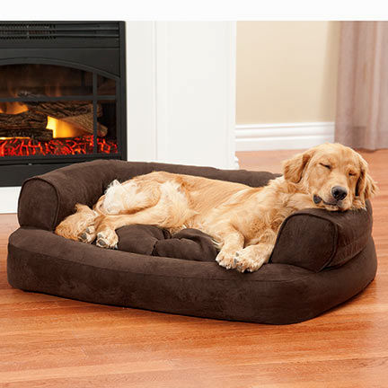 incredible dog bed sofa décor-Luxury Dog Bed sofa Collection