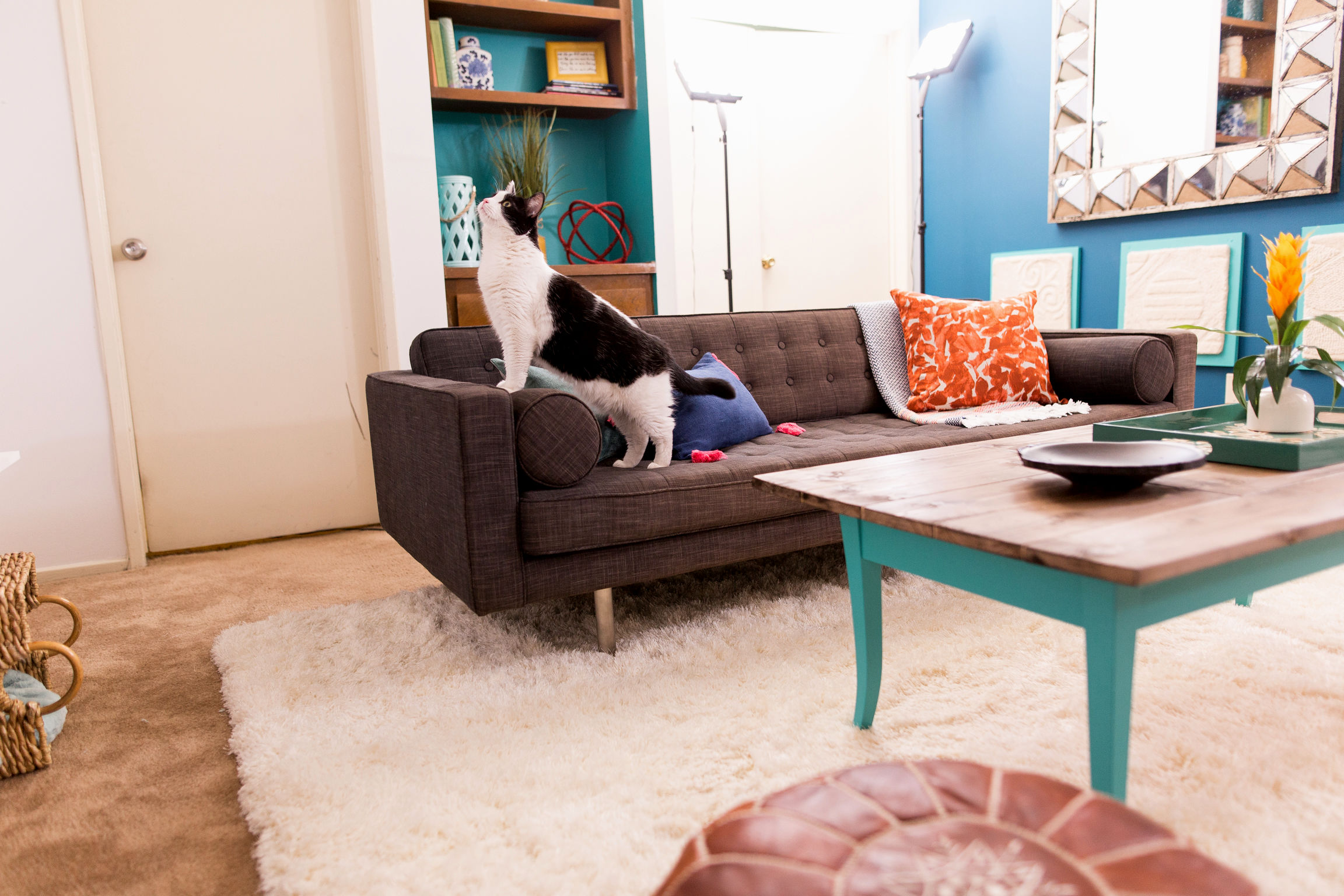 inspirational cat friendly sofa photo-Latest Cat Friendly sofa Inspiration