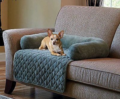 latest sofa covers for pets décor-Cool sofa Covers for Pets Wallpaper