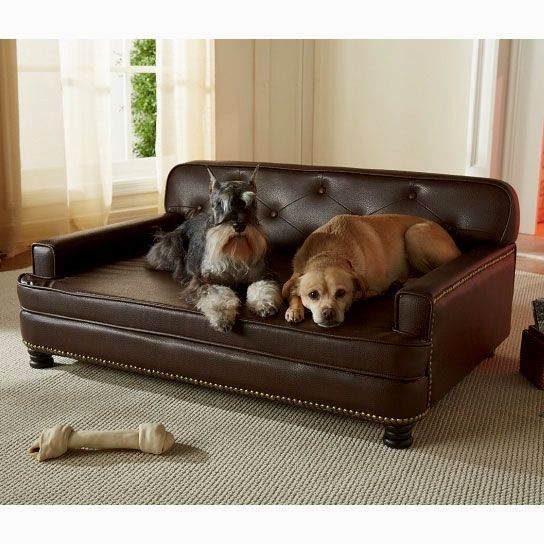 wonderful dog bed sofa photograph-Luxury Dog Bed sofa Collection